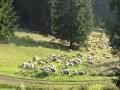 geocaching-erlebnisgarten-mystica-21092008-17-02-05.jpg