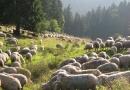 geocaching-erlebnisgarten-mystica-21092008-17-06-01.jpg