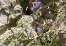 geocaching-hilferuf-eines-fraenkischen-schweizers-26072009-12-39-03.jpg
