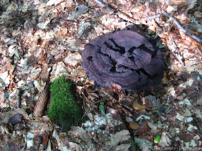 geocaching-expedition-hohler-stein-06092009-15-01-23.jpg