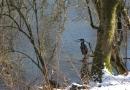 geocaching-adenauerufer-07032010-14-52-01.jpg
