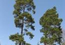 geocaching-multi-lostplace-tour-kolditz-13042009-13-23-05.jpg