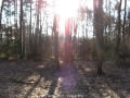 geocaching-rooneys-waldrunde-28122008-12-09-41.jpg