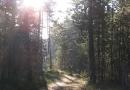geocaching-rooneys-waldrunde-28122008-12-33-07.jpg