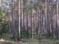 geocaching-rooneys-waldrunde-28122008-12-50-03.jpg