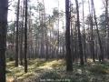 geocaching-rooneys-waldrunde-28122008-12-50-15.jpg