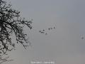 geocaching-die-wildgaense-kommen-06112008-16-16-55.jpg