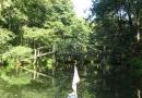 2012-paddeltour-spree-04-09-12-11-16-42