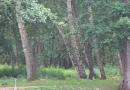 paddeltour-wakenitz-13-07-12-14-04-23