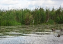 2012-paddeltour-spree-06-09-12-10-18-16