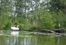 2012-paddeltour-spree-06-09-12-12-54-49