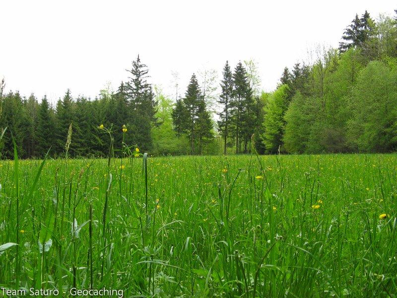 sonntagsspaziergang-13-05-2010-14-20-23