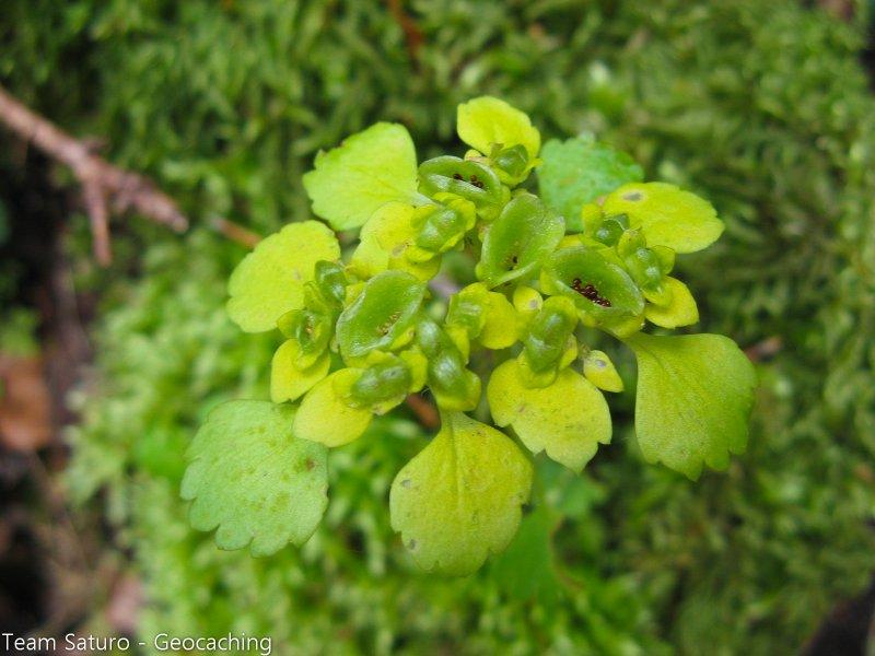 sonntagsspaziergang-13-05-2010-14-41-48