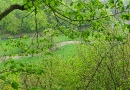 sonntagsspaziergang-13-05-2010-15-44-00