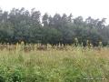 steigerwald-18-ein-ganz-normaler-wandercache-15082010-11-53-01.jpg