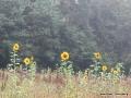 steigerwald-18-ein-ganz-normaler-wandercache-15082010-11-53-12.jpg