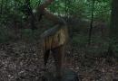steigerwald-18-ein-ganz-normaler-wandercache-15082010-12-02-11.jpg
