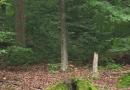 steigerwald-18-ein-ganz-normaler-wandercache-15082010-14-47-52.jpg