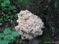 steigerwald-18-ein-ganz-normaler-wandercache-15082010-16-11-26.jpg
