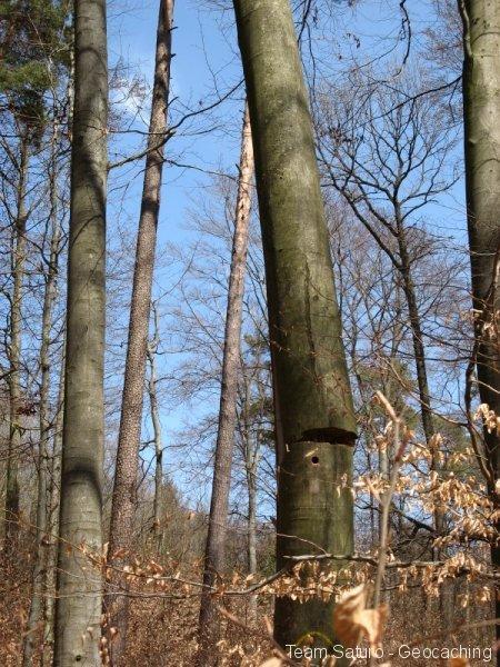 steinert-18042010-13-29-45.jpg