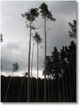 geocaching-umkreissuche-baylichtenkulm-29032009-12-37-21