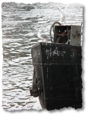 geocaching-hochwassermarken-14022010-14-27-27