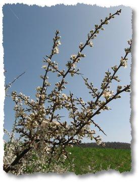 steigerwald-19-alle-macht-den-multis-100411-10-26-41