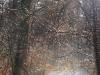 geocaching-hauptsmoorwald-ii-14122008-13-26-25.jpg