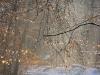 geocaching-hauptsmoorwald-ii-14122008-13-26-34.jpg