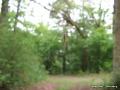 maintalblick-unterhaid-03062010-13-23-35.jpg