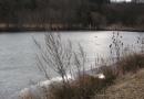 entlang-des-langenbaches-26-02-12-16-19-17