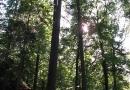 geocaching-expedition-hohler-stein-06092009-14-38-49.jpg