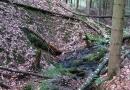 geocaching-expedition-hohler-stein-06092009-15-21-39.jpg