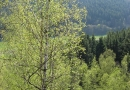 geocaching-multi-lostplace-tour-kolditz-13042009-15-12-22.jpg