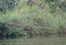2012-paddeltour-spree-05-09-12-10-27-22