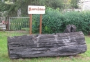 2012-paddeltour-spree-05-09-12-18-02-59