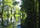 2012-paddeltour-spree-02-09-12-12-13-46