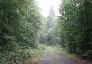 steigerwald-18-ein-ganz-normaler-wandercache-15082010-14-26-54.jpg