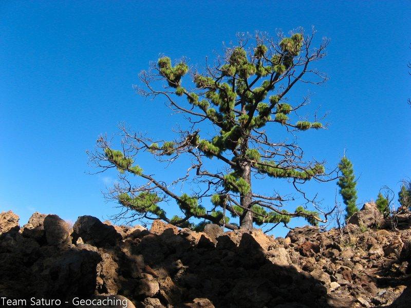 teneriffa-2010-21102010-10-33-55.jpg