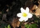 urwiese-und-huthaeuschen-25-03-12-16-27-45